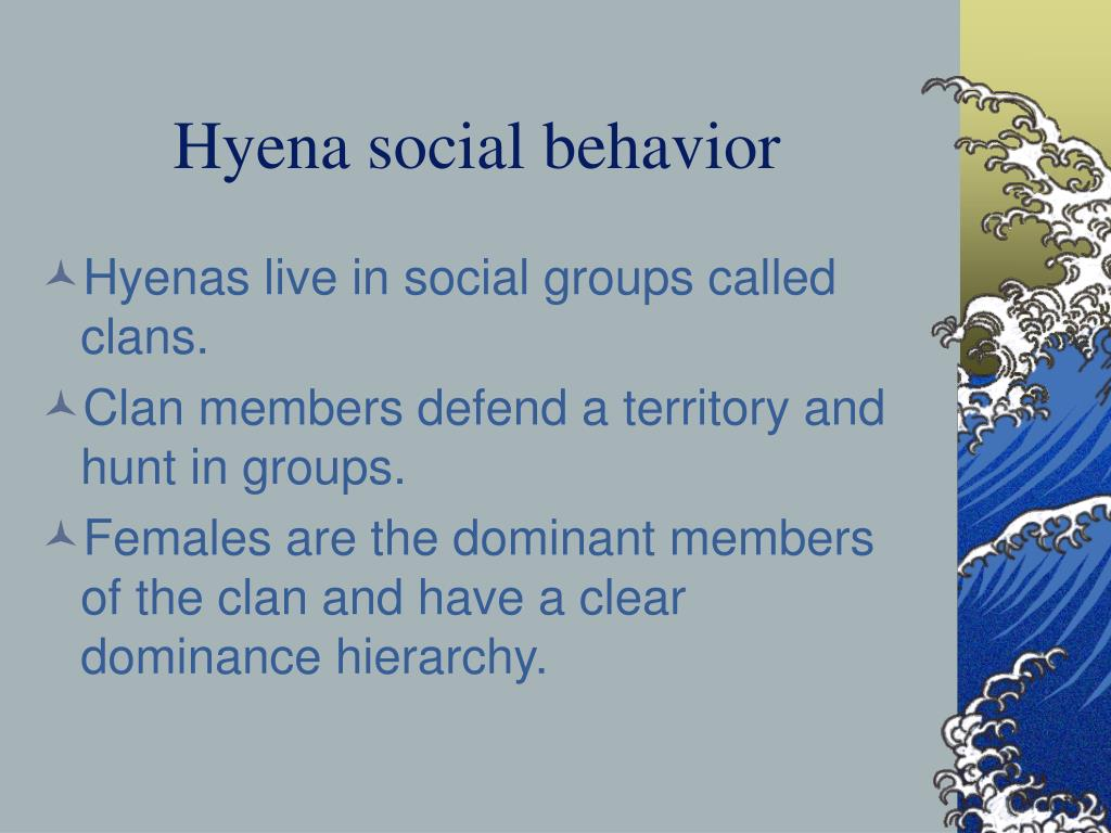 Hyena social behavior