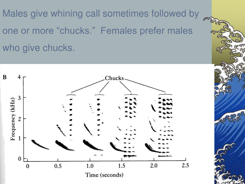 Males give whining call sometimes followed by