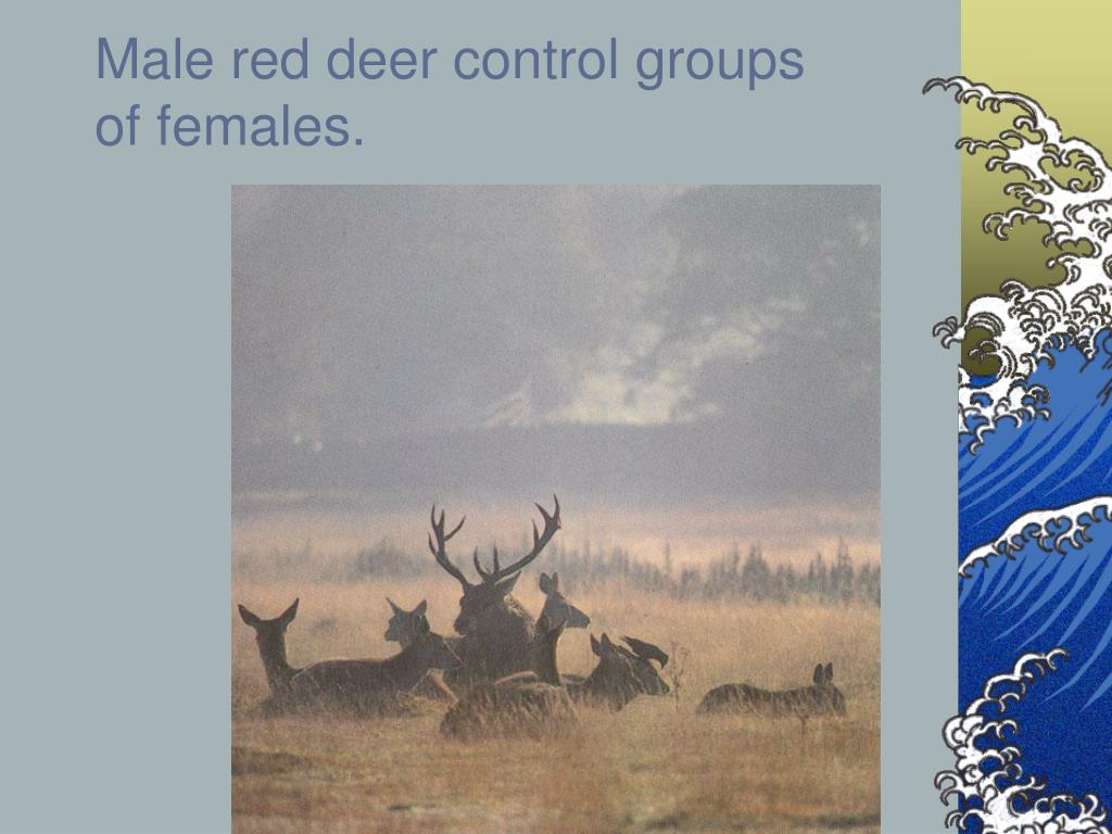 Male red deer control groups