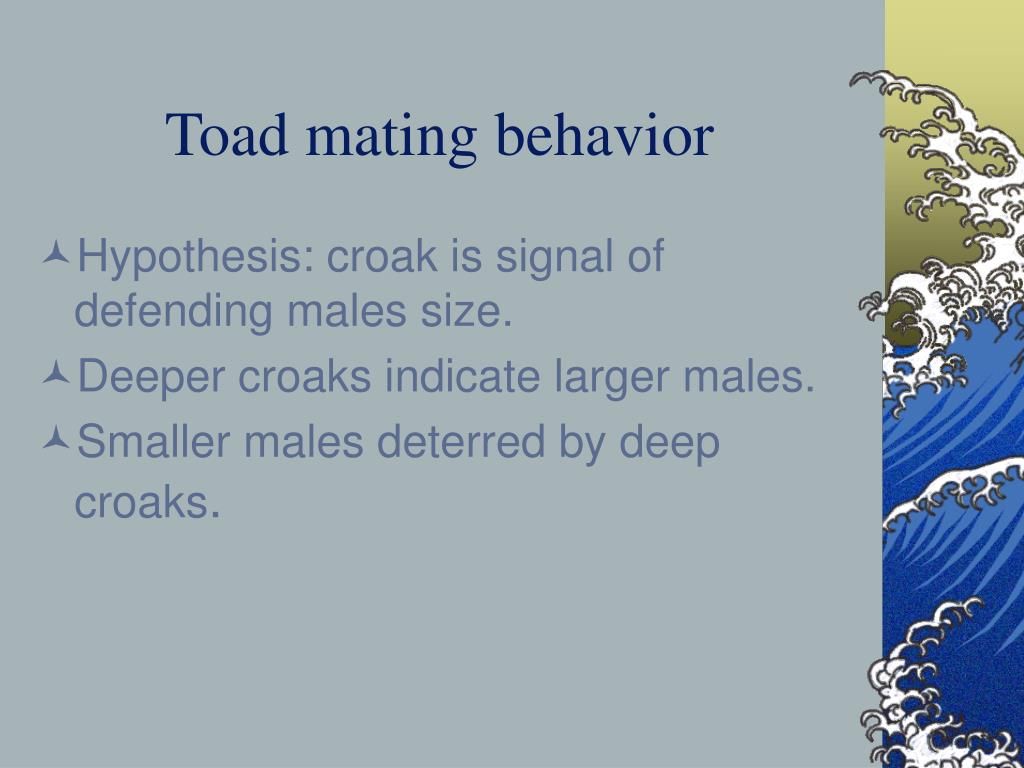 Toad mating behavior