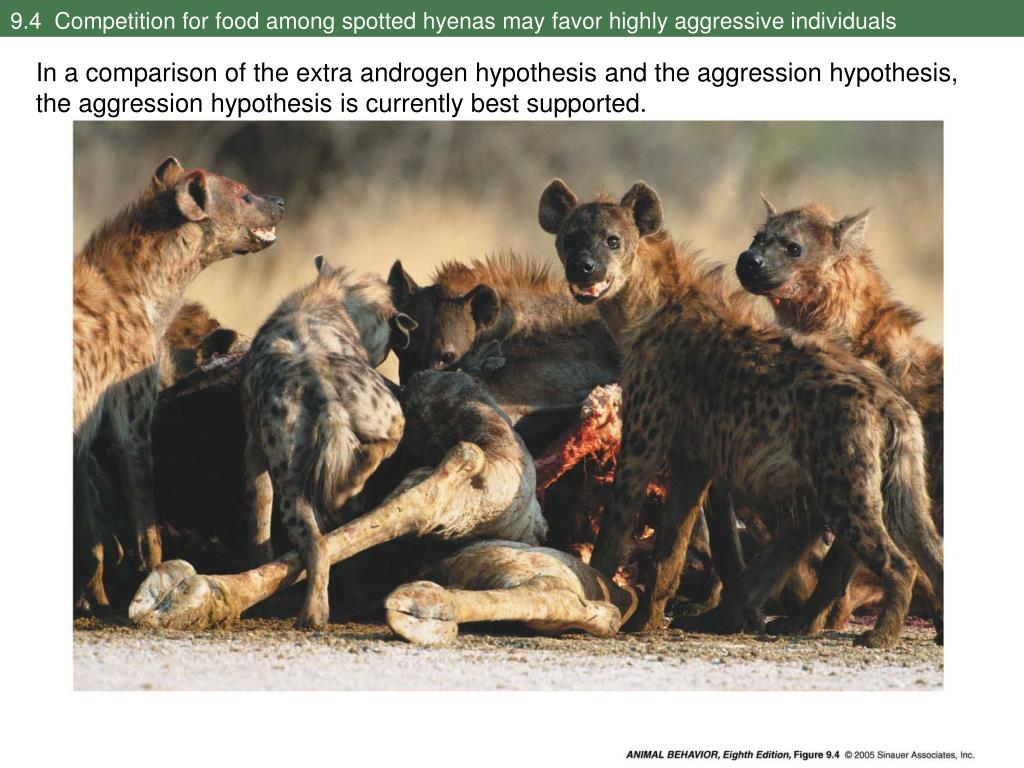 9.4  Competition for food among spotted hyenas may favor highly aggressive individuals