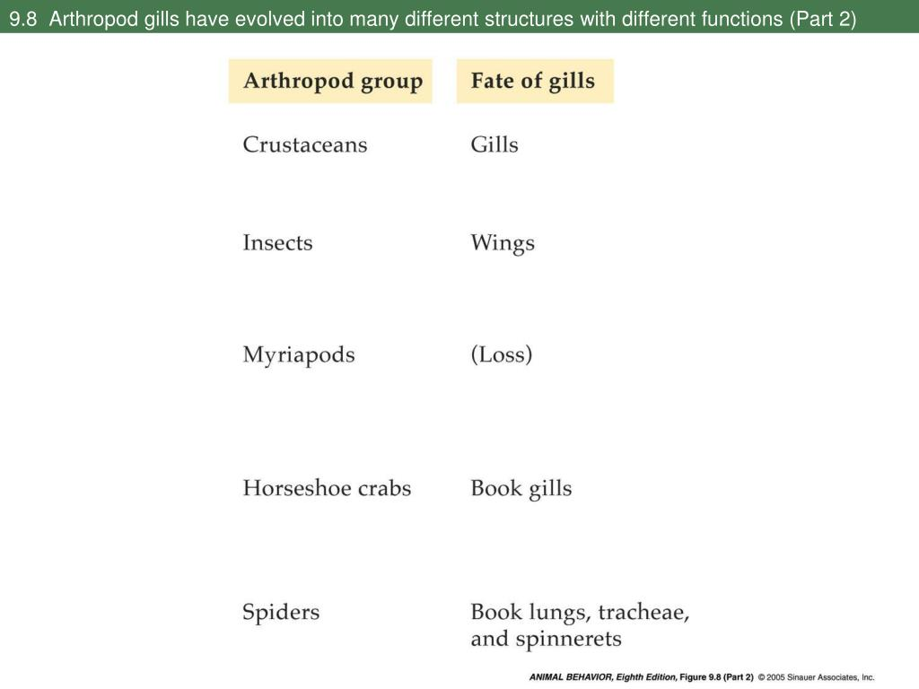 9.8  Arthropod gills have evolved into many different structures with different functions (Part 2)