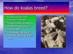 how do koalas breed