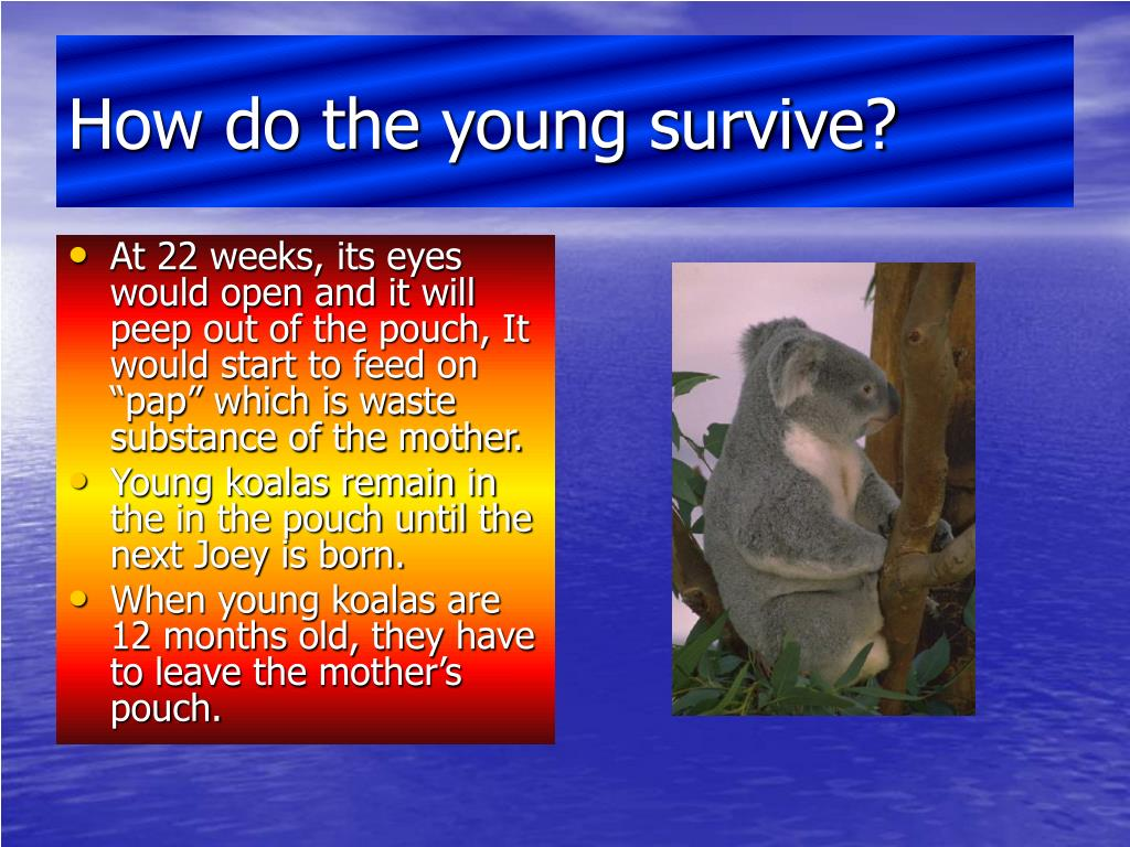 How do the young survive?