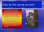 how do the young survive