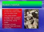 koala s habitat