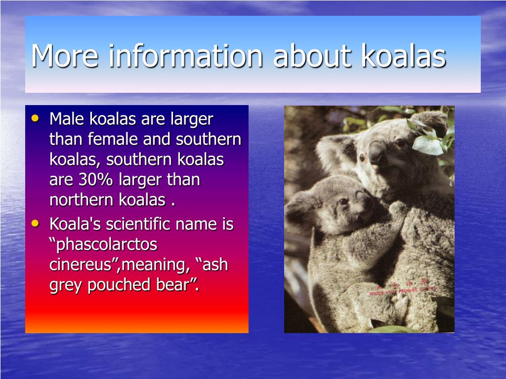 More information about koalas