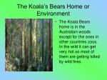 the koala s bears home or environment