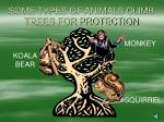 some types of animals climb trees for protection