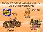 some types of animals like to live underground