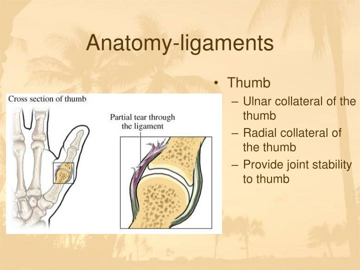 PPT - Chapter 12-Wrist and Hand Injuries PowerPoint Presentation ...
