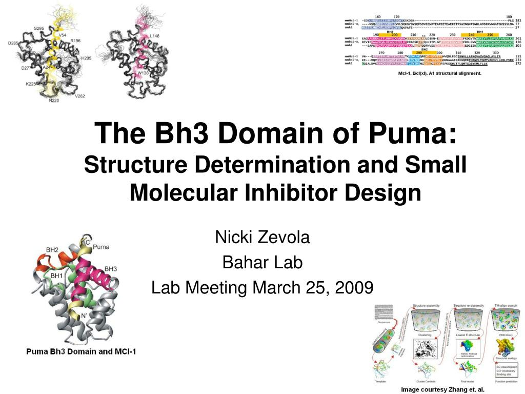 the bh3 domain of puma structure determination and small molecular inhibitor design l.