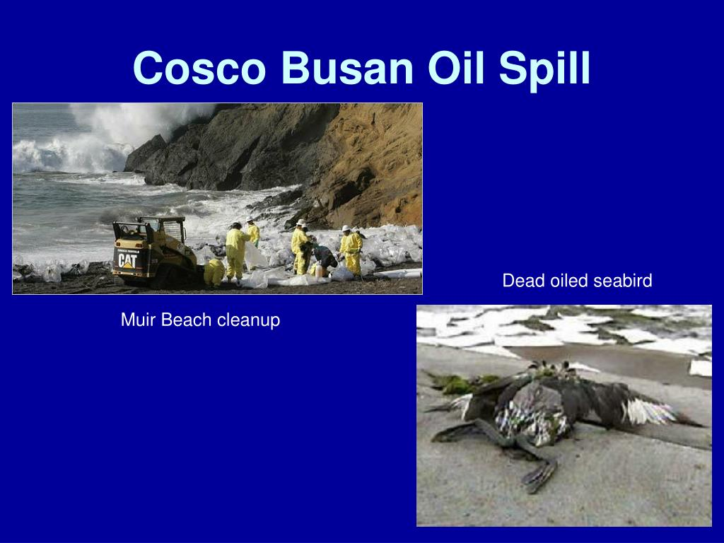 Cosco Busan Oil Spill
