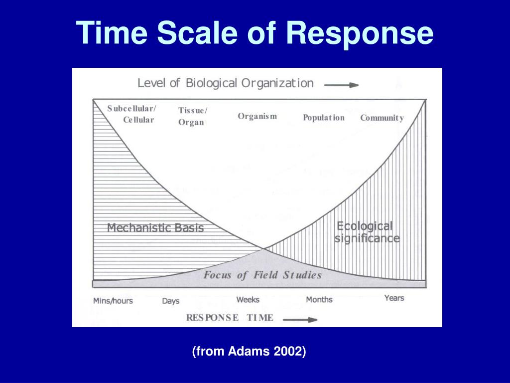 Time Scale of Response