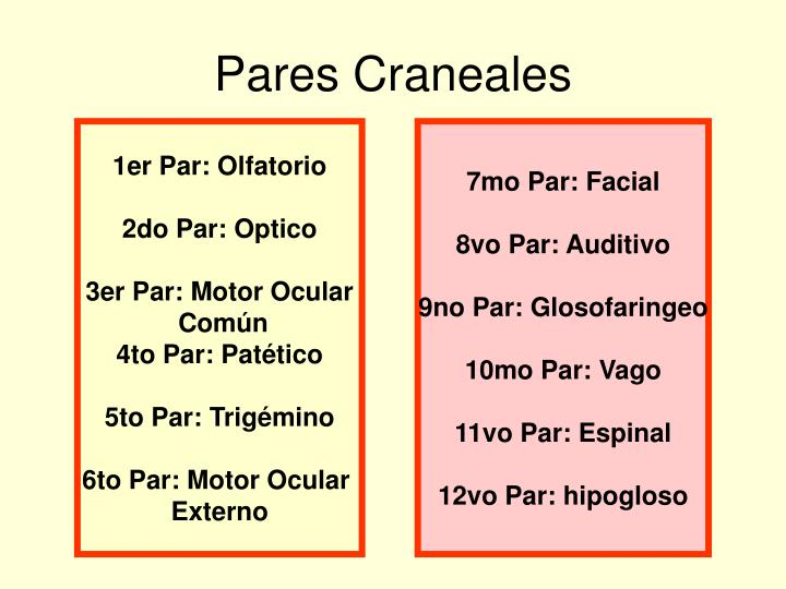 Ppt pares craneales powerpoint presentation id 1090145 for 12 paredes craneales