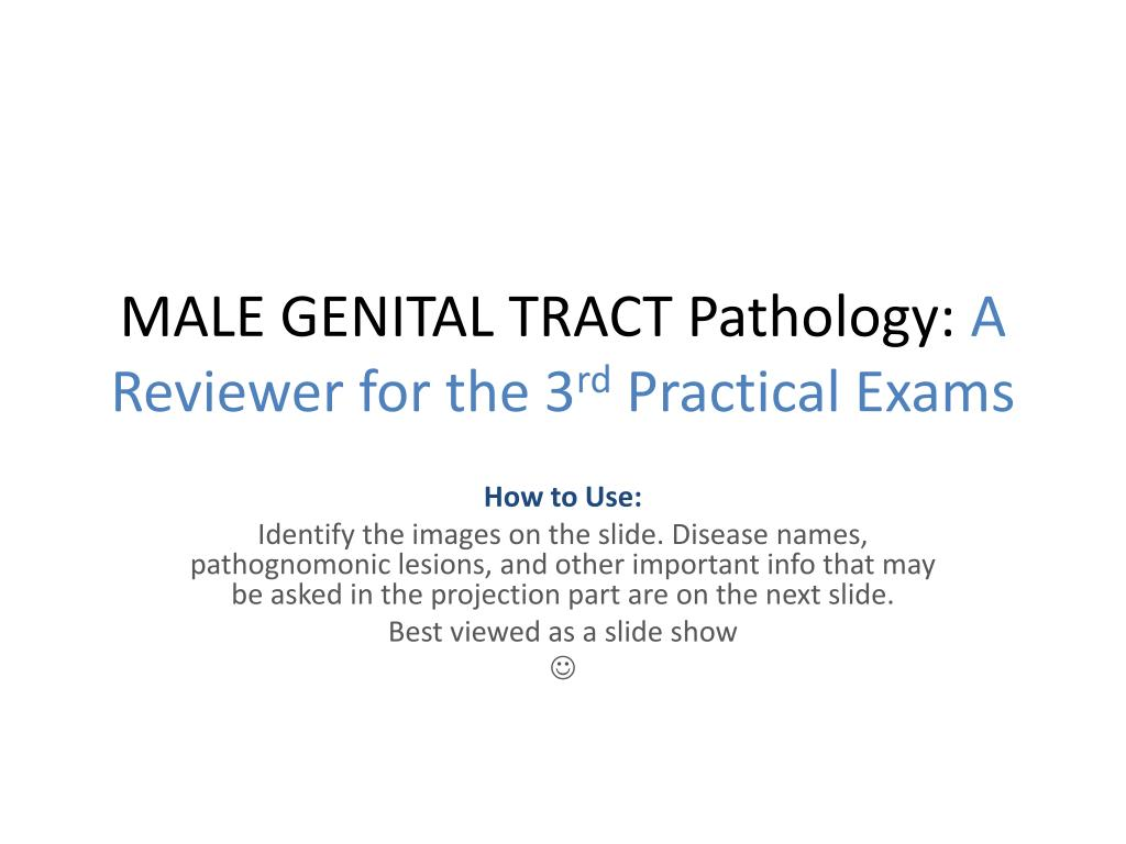male genital tract pathology a reviewer for the 3 rd practical exams l.