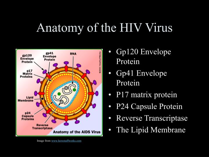 Ppt Hivaids Powerpoint Presentation Id1093803