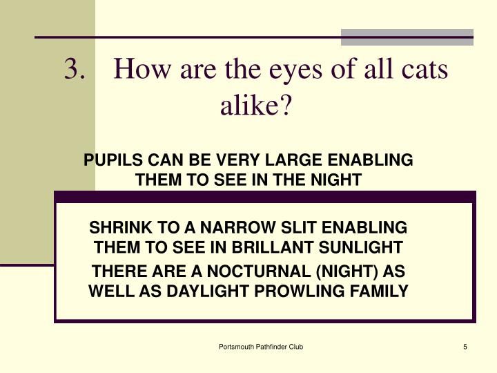 3.How are the eyes of all cats alike?