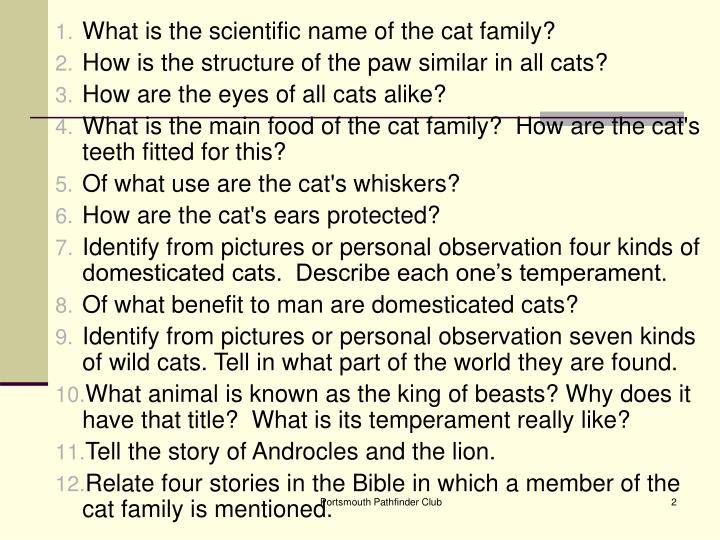 What is the scientific name of the cat family?