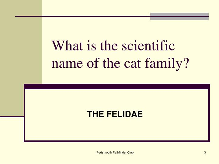 What is the scientific name of the cat family