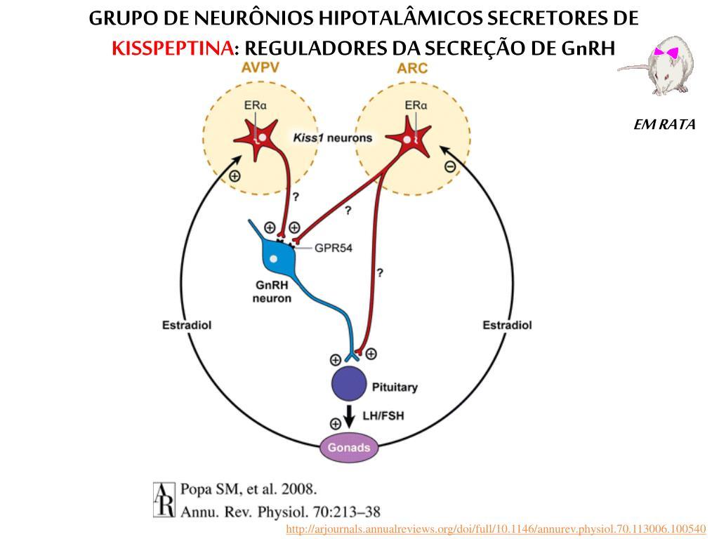 GRUPO DE NEURÔNIOS HIPOTALÂMICOS SECRETORES DE