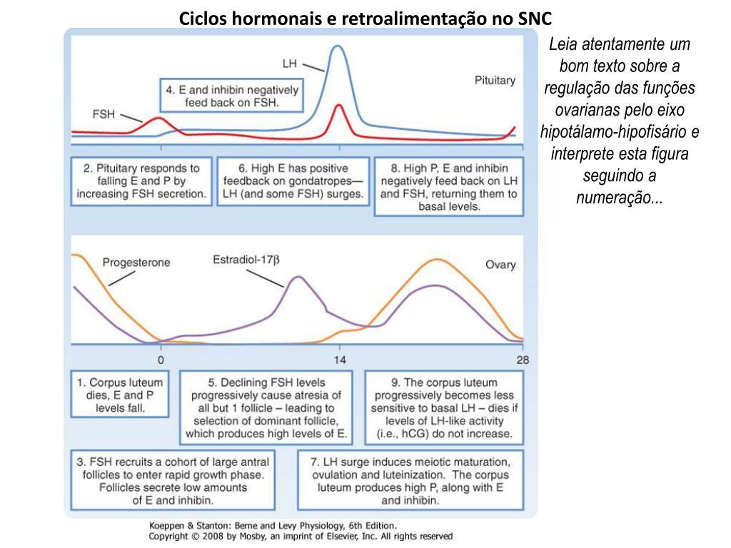 Ciclos hormonais e retroalimentação no SNC