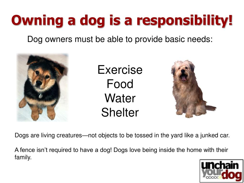 Owning a dog is a responsibility!