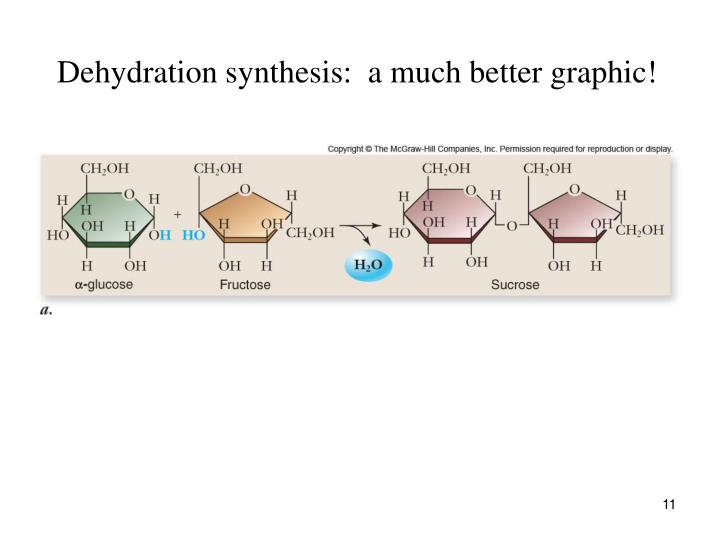 Dehydration synthesis:  a much better graphic!