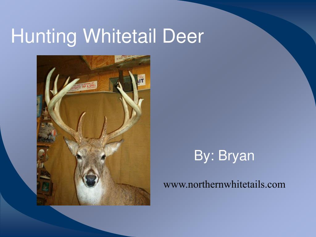 hunting whitetail deer l.