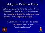 malignant catarrhal fever6