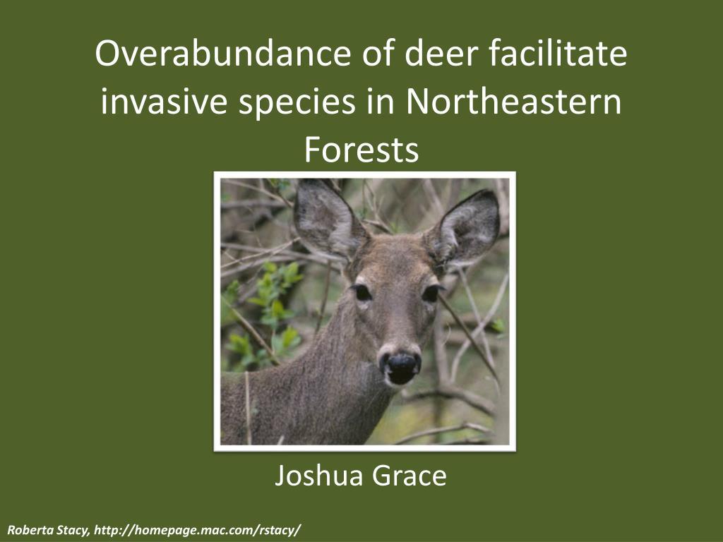 overabundance of deer facilitate invasive species in northeastern forests