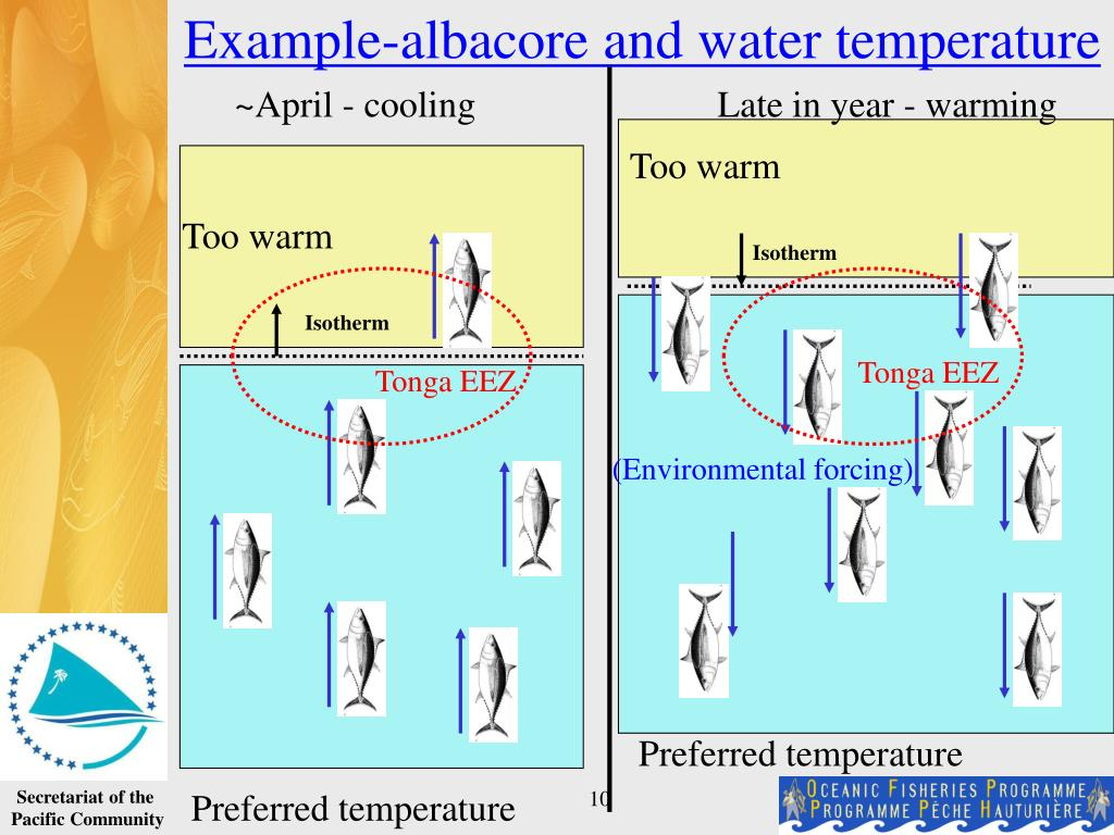 Example-albacore and water temperature