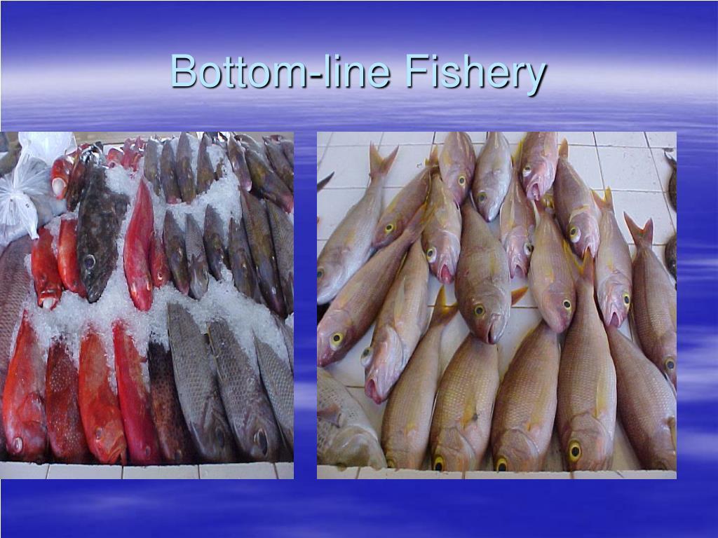 Bottom-line Fishery
