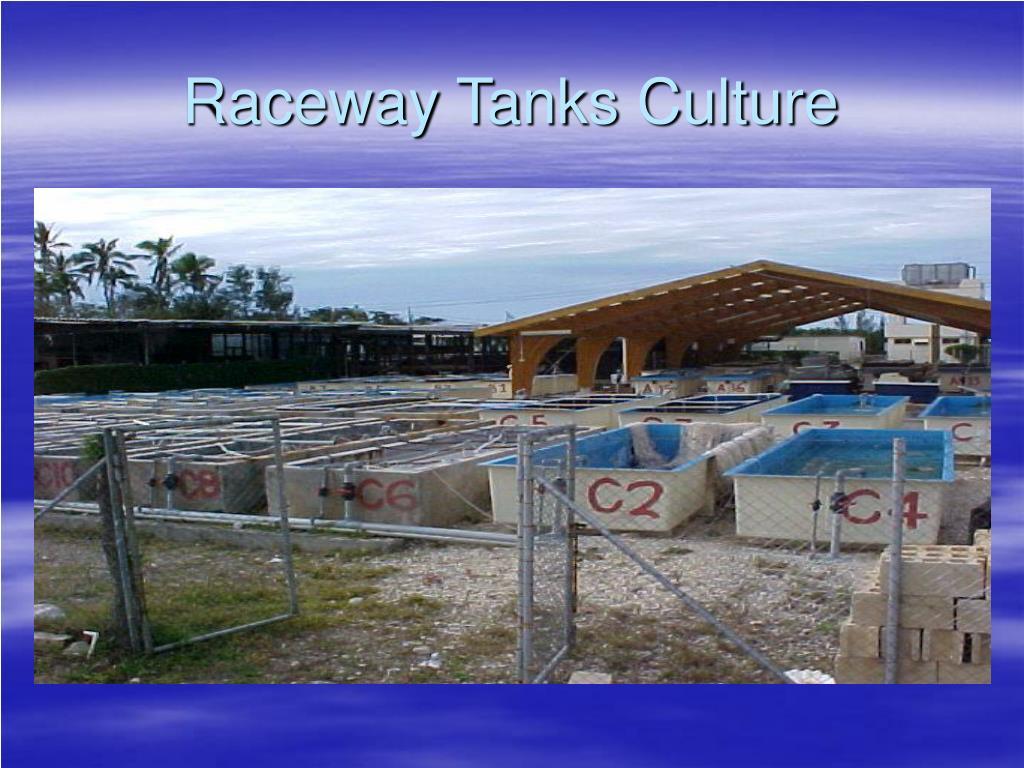 Raceway Tanks Culture