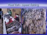 reef fish spear fishing
