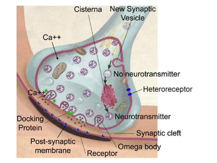 Nanoneuroetc