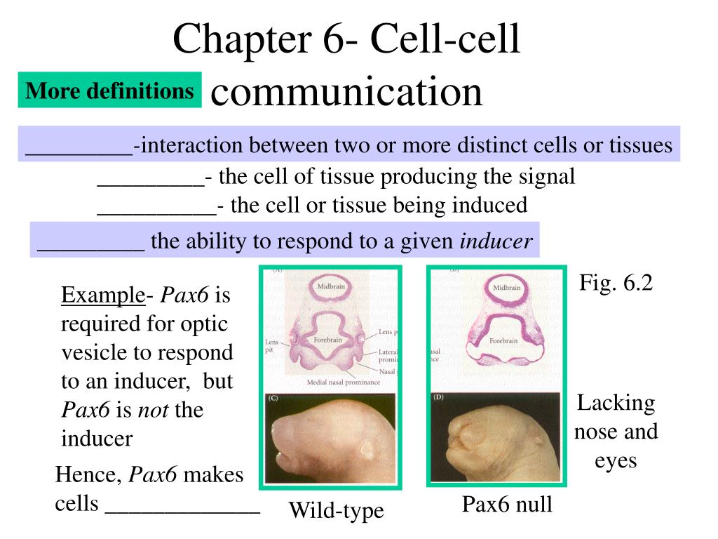 chapter 6 cell cell communication l.