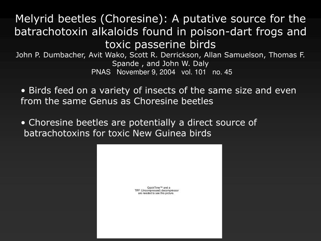 Melyrid beetles (Choresine): A putative source for the batrachotoxin alkaloids found in poison-dart frogs and toxic passerine birds