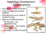 amphibian development metamorphosis