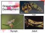 grasshopper development