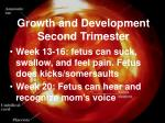 growth and development second trimester