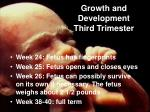 growth and development third trimester