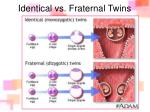 identical vs fraternal twins