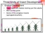 three kinds of insect development