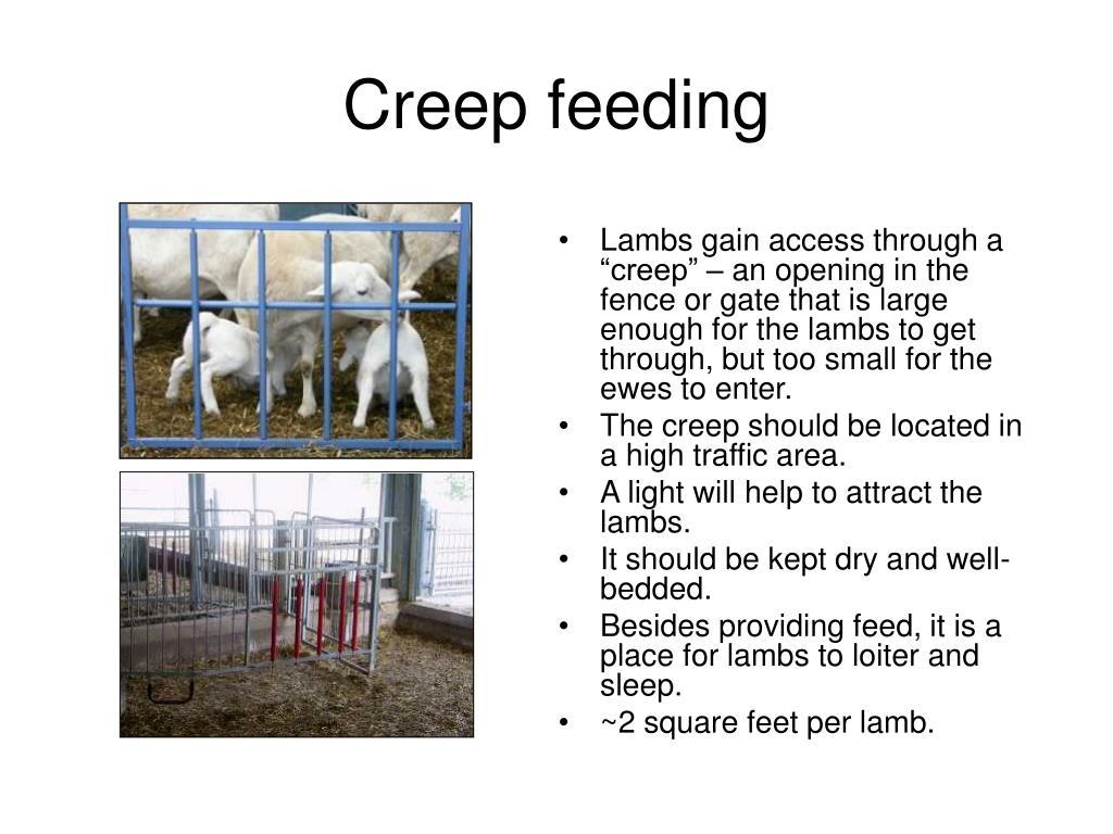 Creep feeding