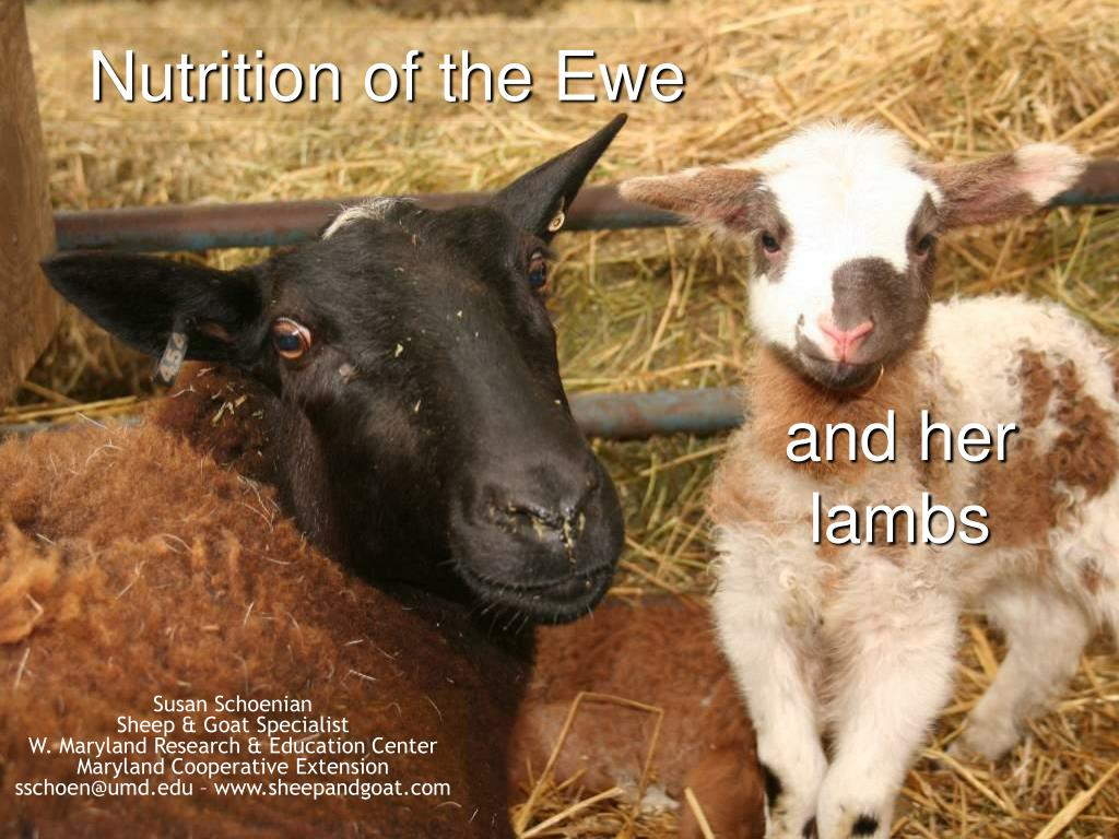 nutrition of the ewe l.