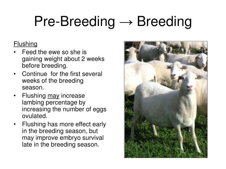 Pre breeding breeding
