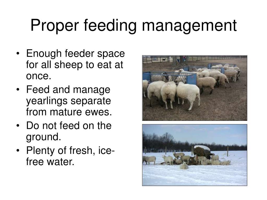Proper feeding management
