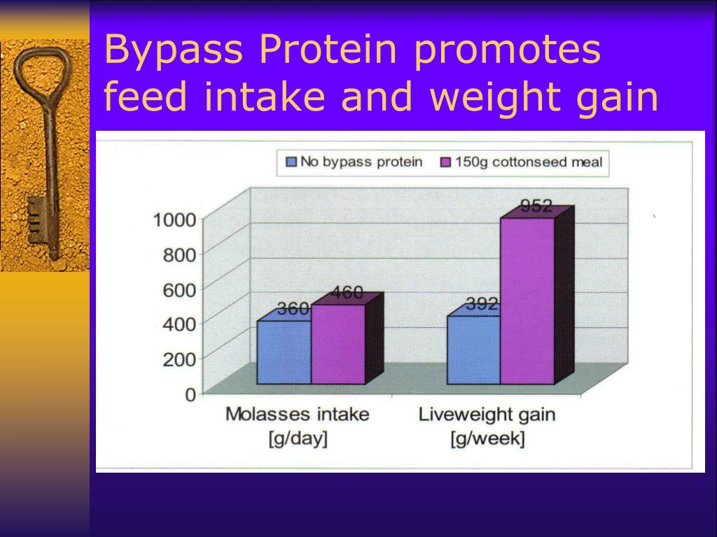 Bypass Protein promotes feed intake and weight gain