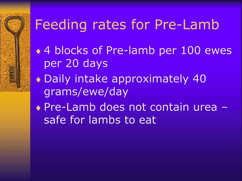 Feeding rates for Pre-Lamb